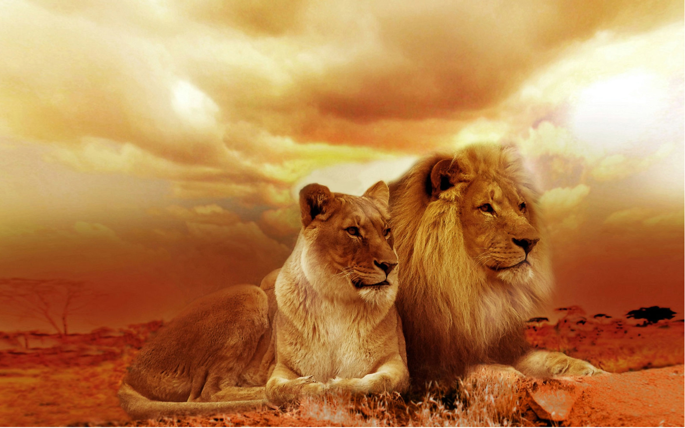 HD Quality Wallpaper | Collection: Animal, 2880x1800 Lion HD wallpapers