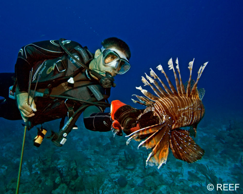 Images of Lionfish | 1000x800