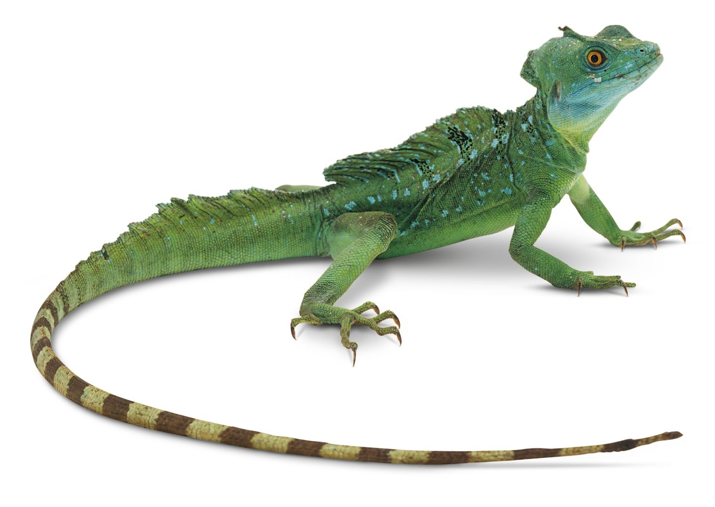 Lizard High Quality Background on Wallpapers Vista