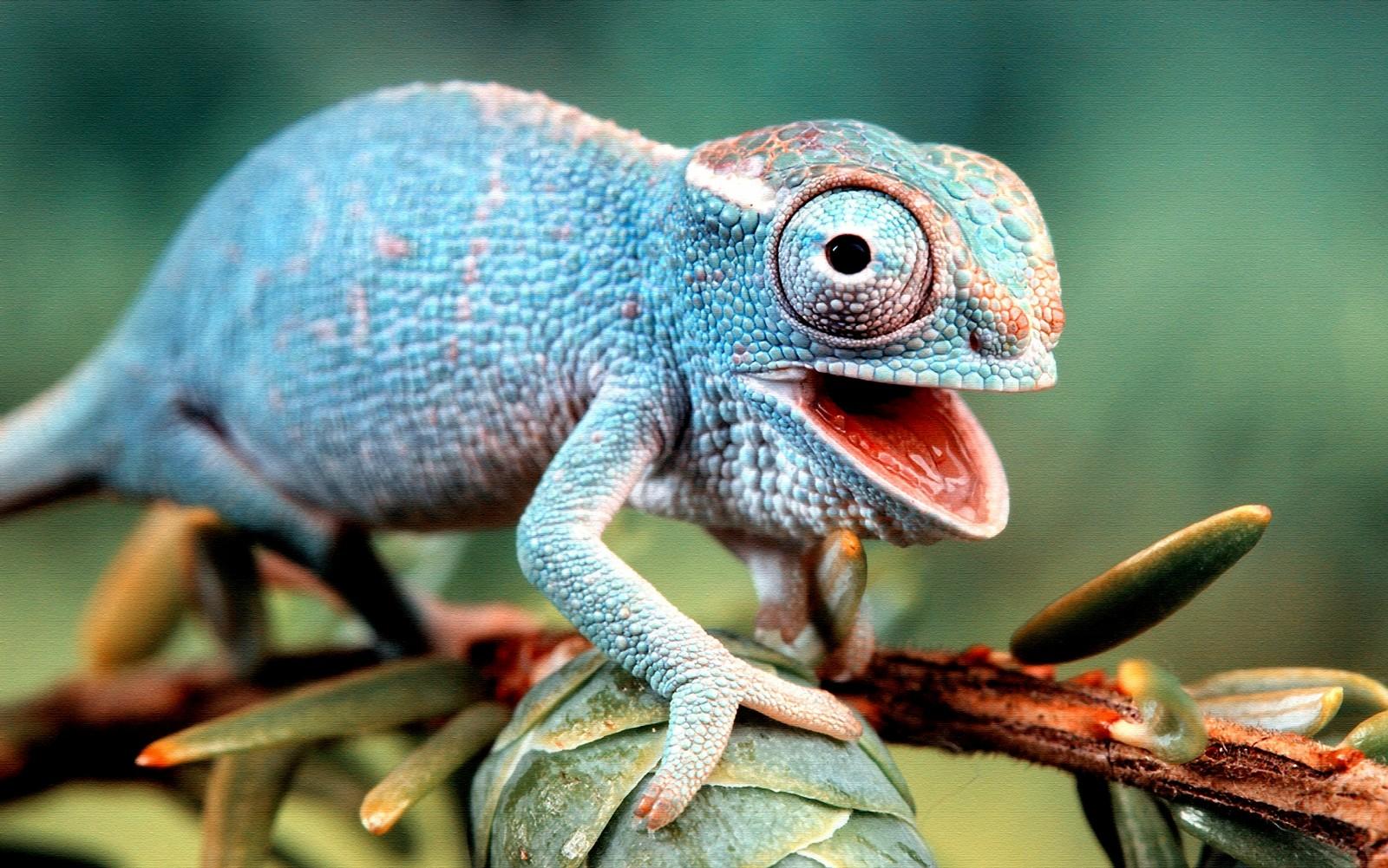 Nice Images Collection: Lizard Desktop Wallpapers
