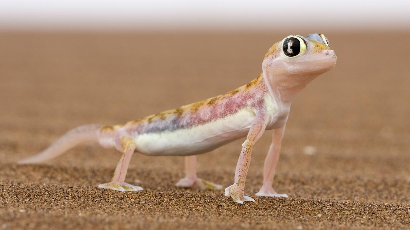 Images of Lizard | 1400x788