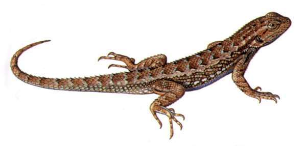 Images of Lizard | 599x287