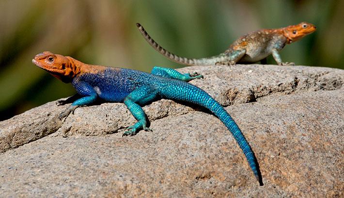 Lizard HD wallpapers, Desktop wallpaper - most viewed