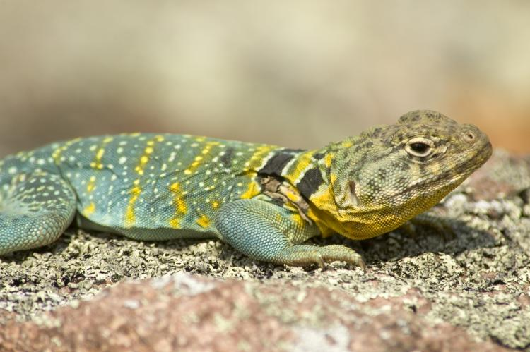 Images of Lizard | 750x499