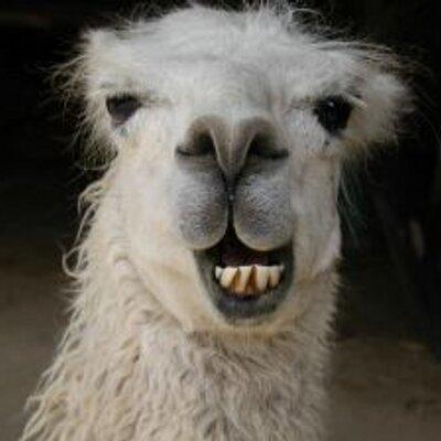 Images of Llama | 400x400