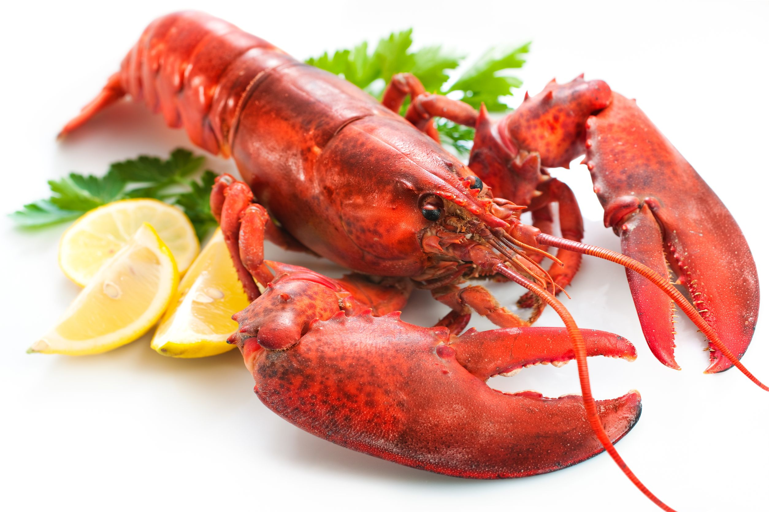 Lobster Pics, Animal Collection