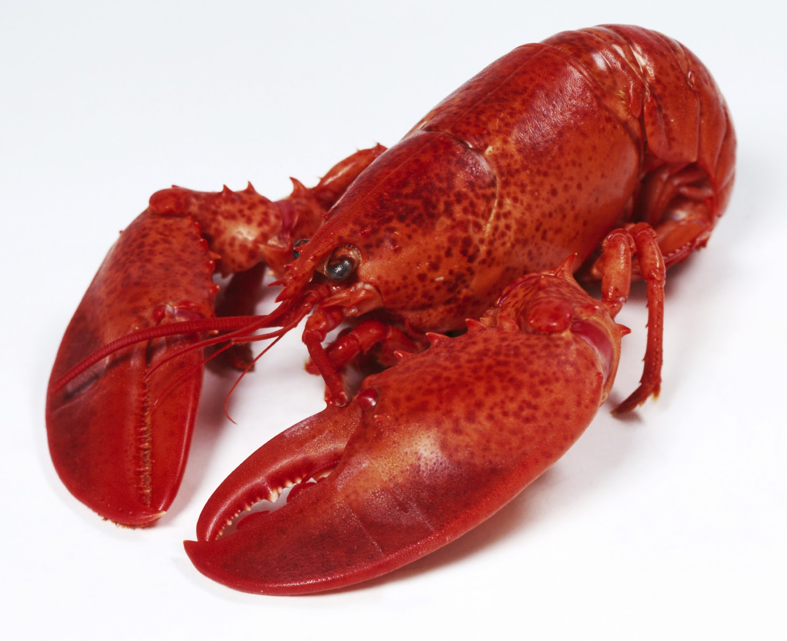 HD Quality Wallpaper | Collection: Food, 1600x1303 Lobster
