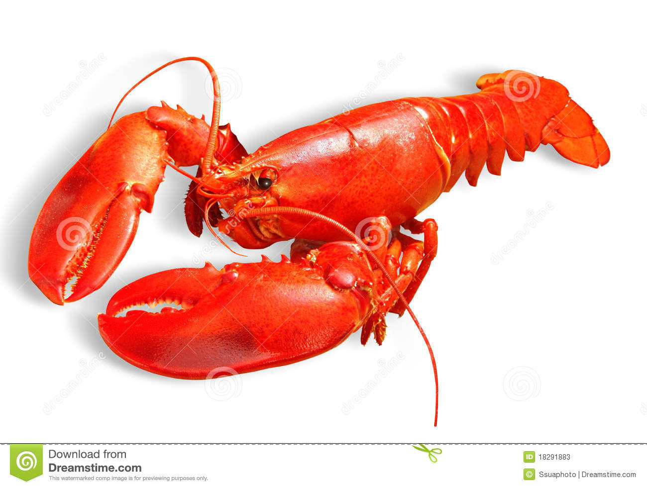 Amazing Lobster Pictures & Backgrounds