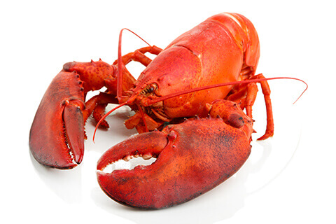 Images of Lobster | 480x320