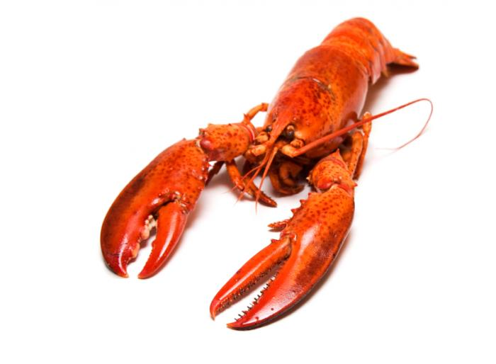 Images of Lobster | 700x514