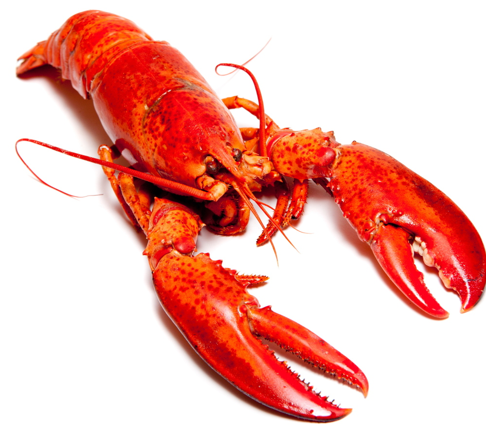 Nice Images Collection: Lobster Desktop Wallpapers