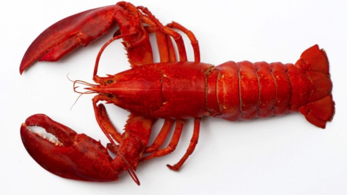 Nice wallpapers Lobster 1200x675px