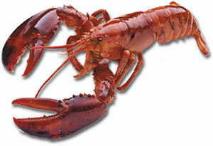 Nice wallpapers Lobster 300x205px