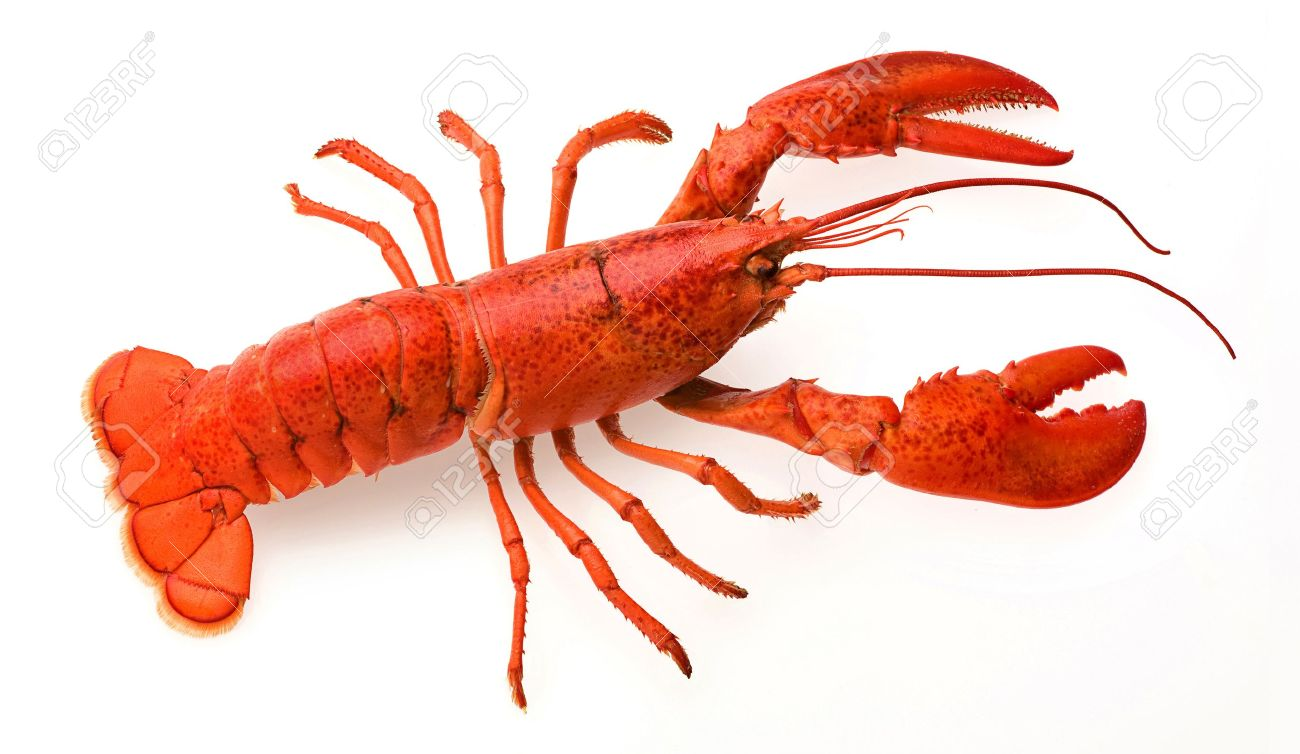 Nice wallpapers Lobster 1300x754px