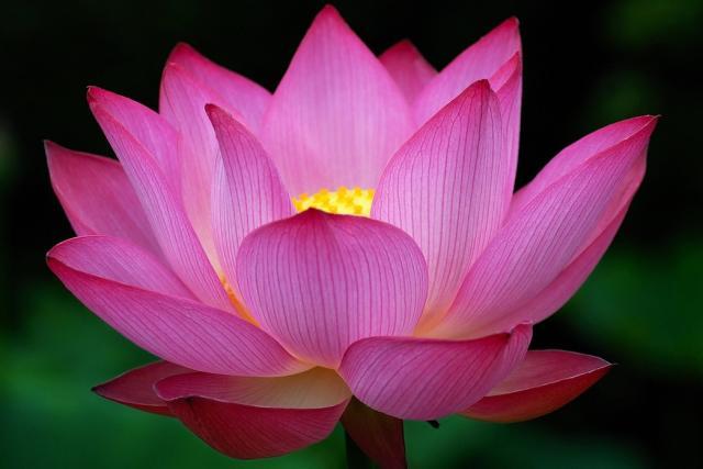 Images of Lotus   640x427