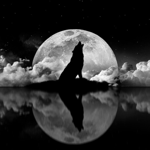 Lune Noire High Quality Background on Wallpapers Vista