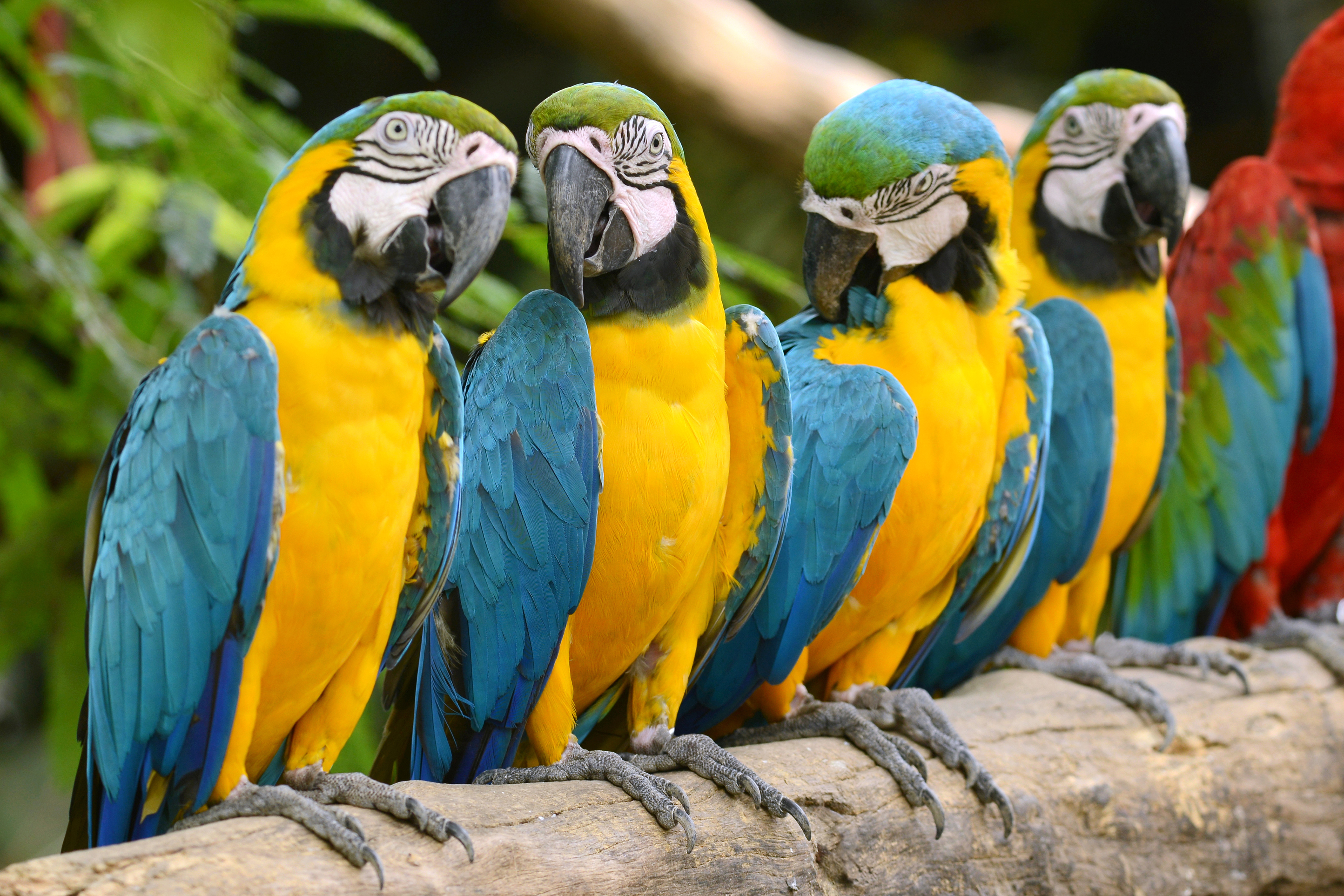 Images of Macaw | 7200x4800