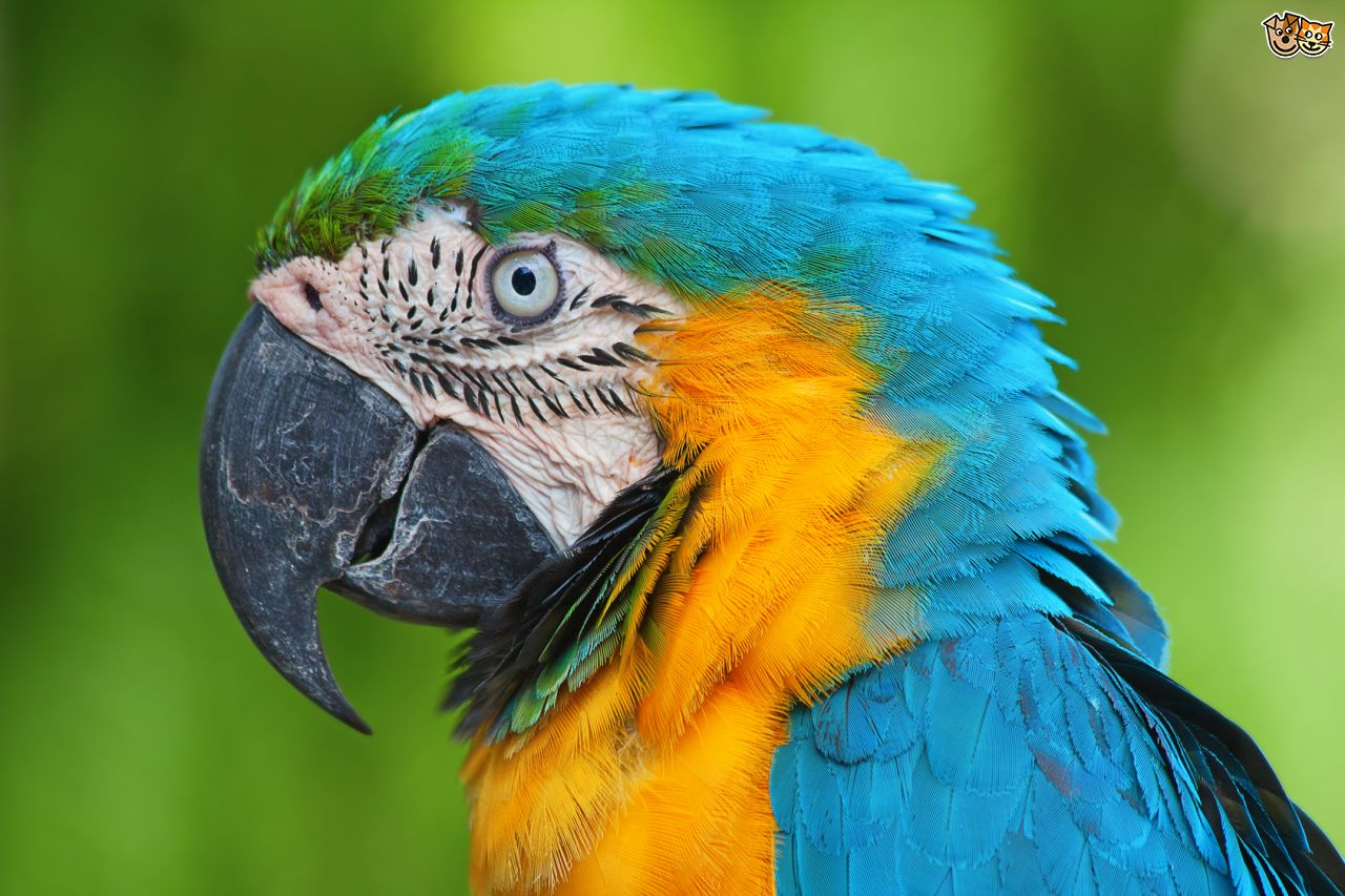 HD Quality Wallpaper | Collection: Animal, 1280x853 Macaw