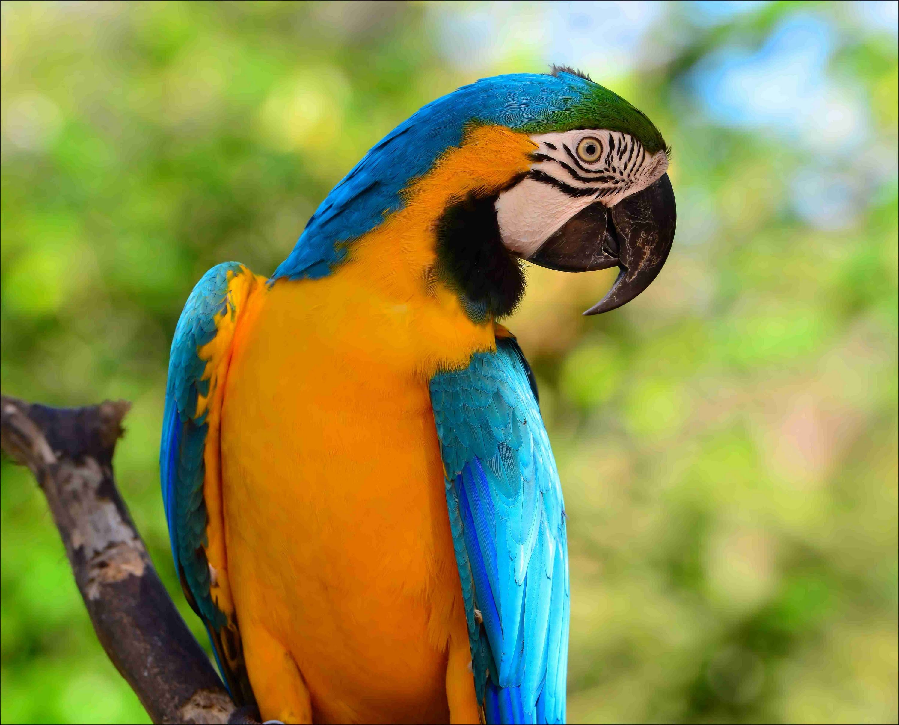 Macaw Backgrounds on Wallpapers Vista