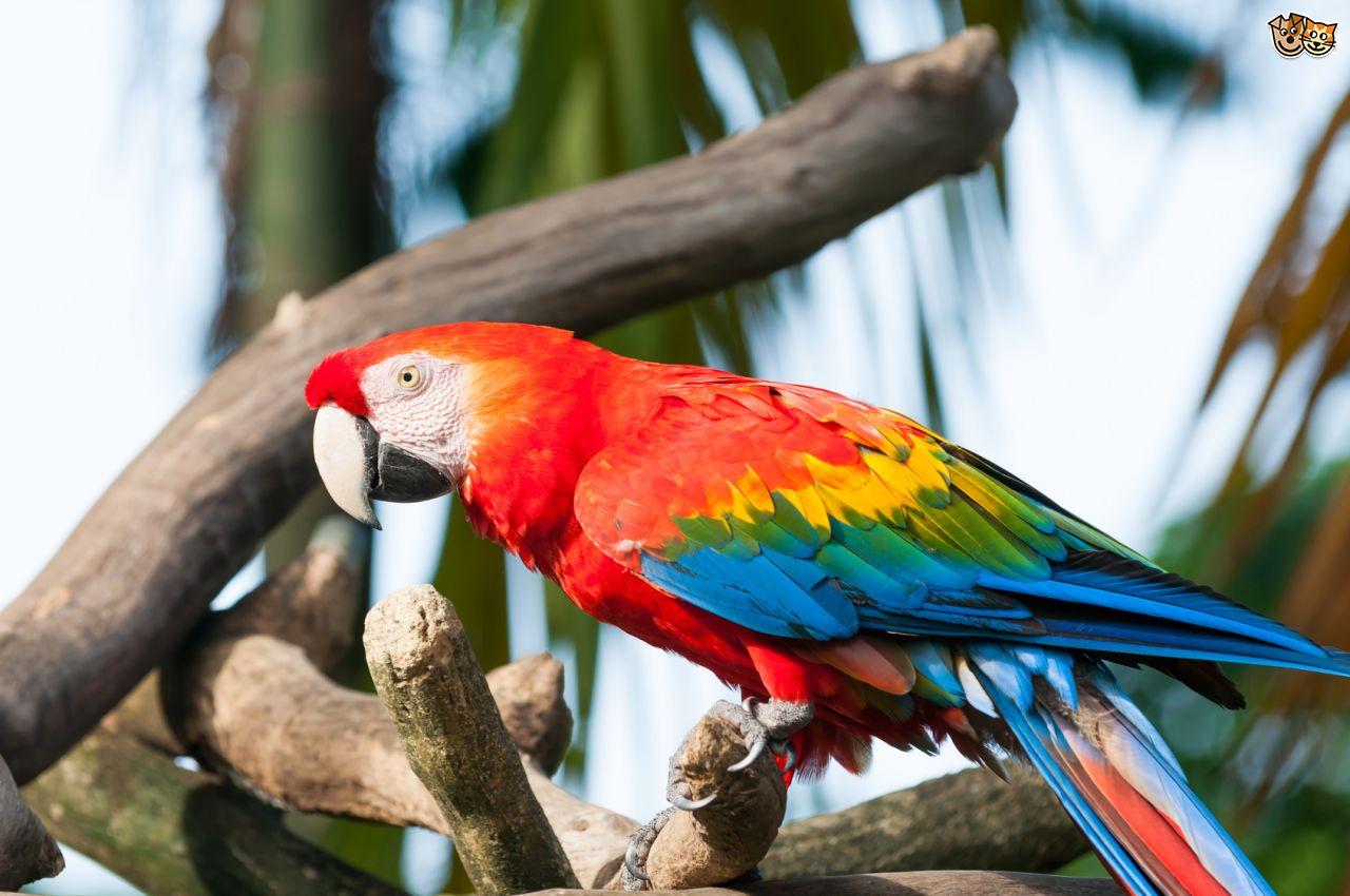 Macaw HD wallpapers, Desktop wallpaper - most viewed