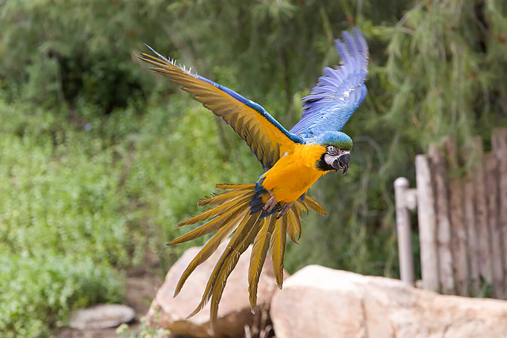 Nice wallpapers Macaw 1000x667px