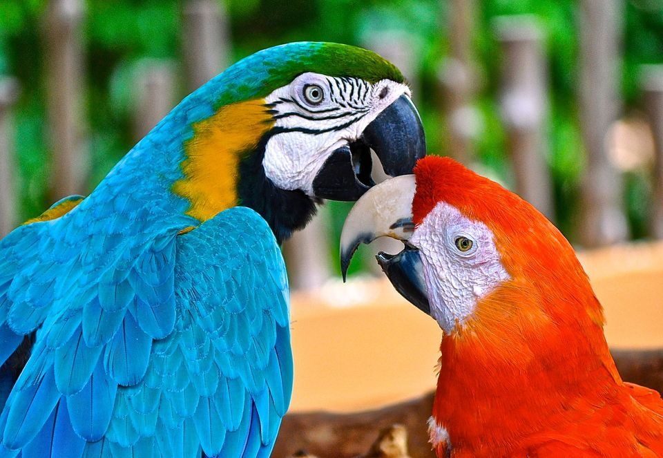 Images of Macaw | 960x663