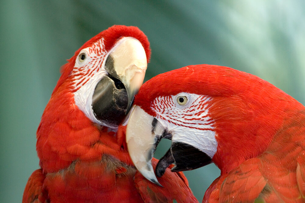 Images of Macaw | 1000x667