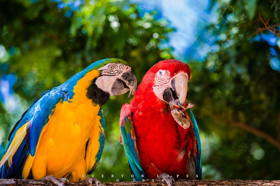 Amazing Macaw Pictures & Backgrounds