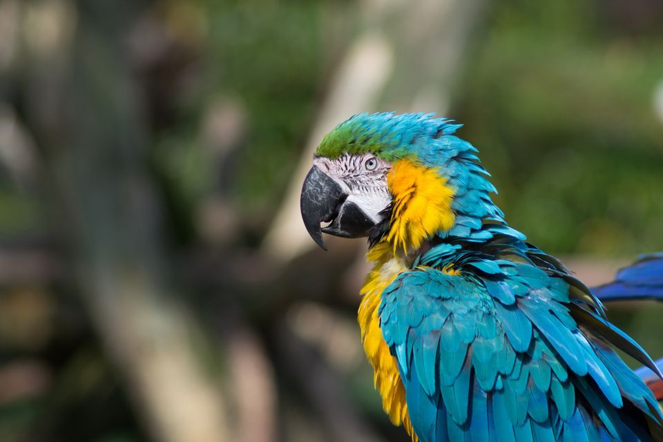 960x640 > Macaw Wallpapers