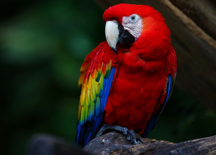 Macaw High Quality Background on Wallpapers Vista