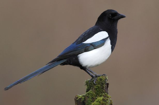 Magpie Pics, Animal Collection