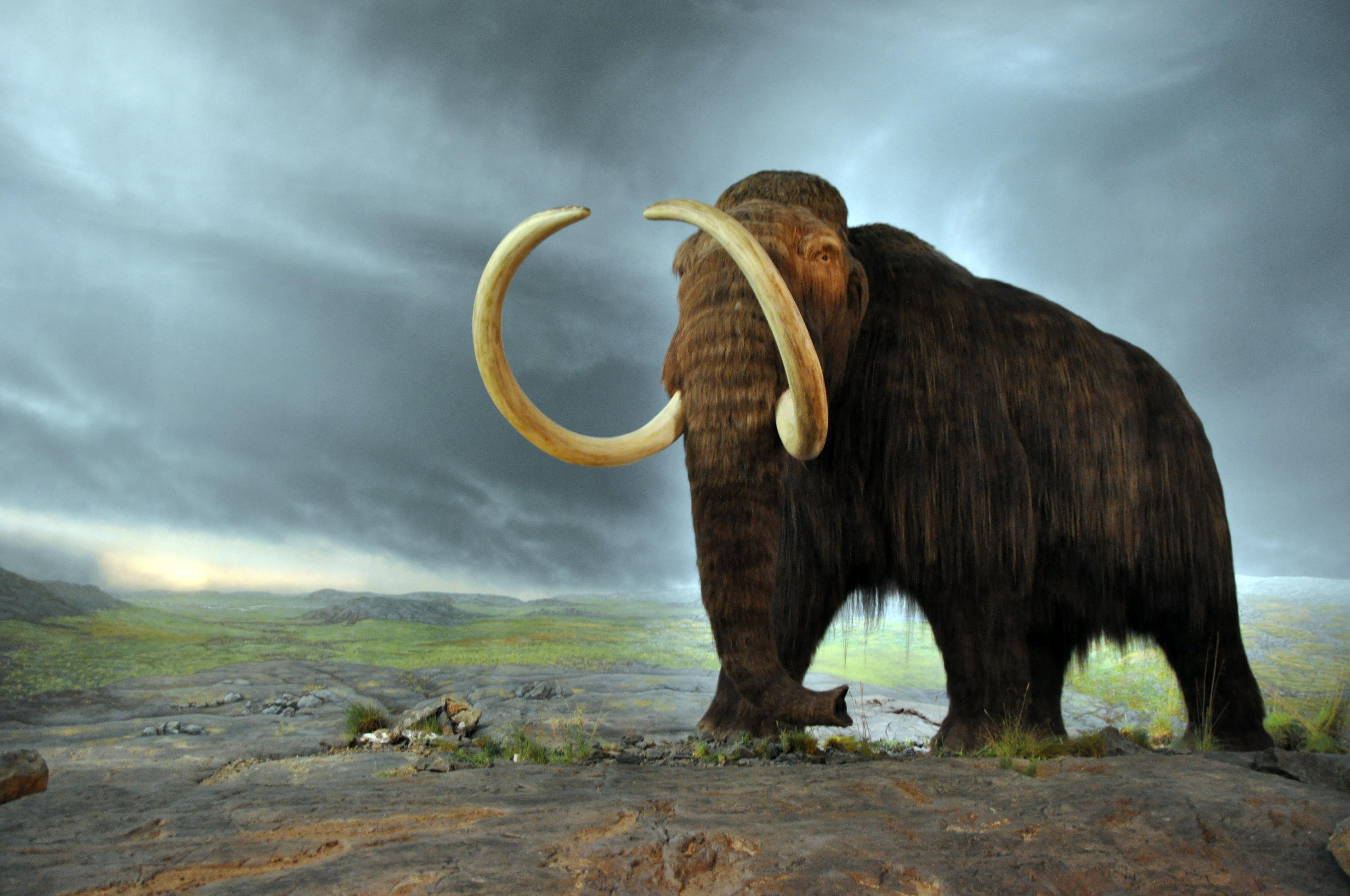 High Resolution Wallpaper | Mammoth 4288x2848 px