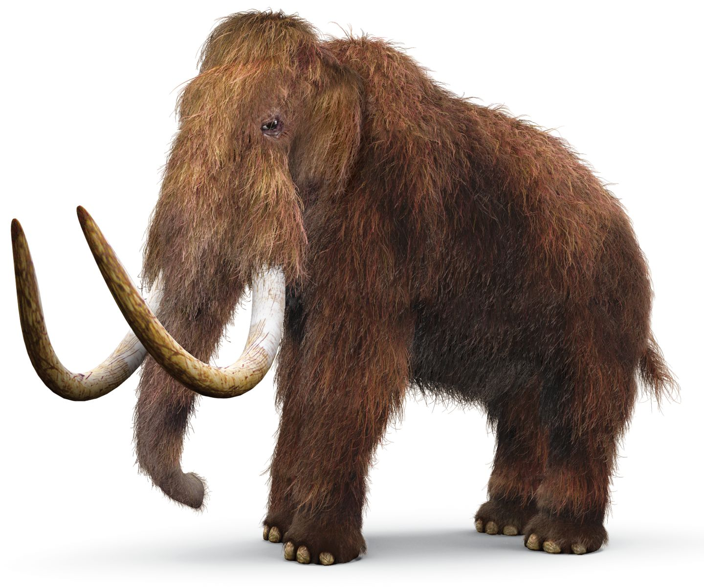 Mammoth Pics, Animal Collection