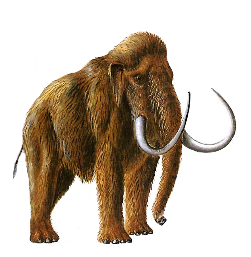 Mammoth Backgrounds on Wallpapers Vista