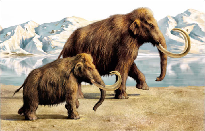 Mammoth Backgrounds, Compatible - PC, Mobile, Gadgets| 720x460 px