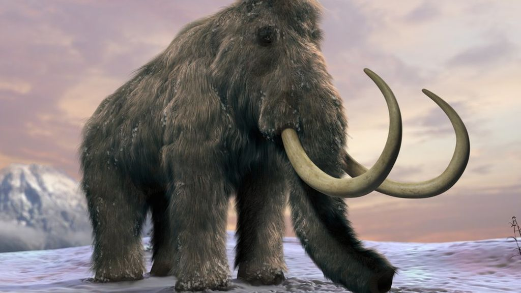 HD Quality Wallpaper | Collection: Animal, 1024x576 Mammoth