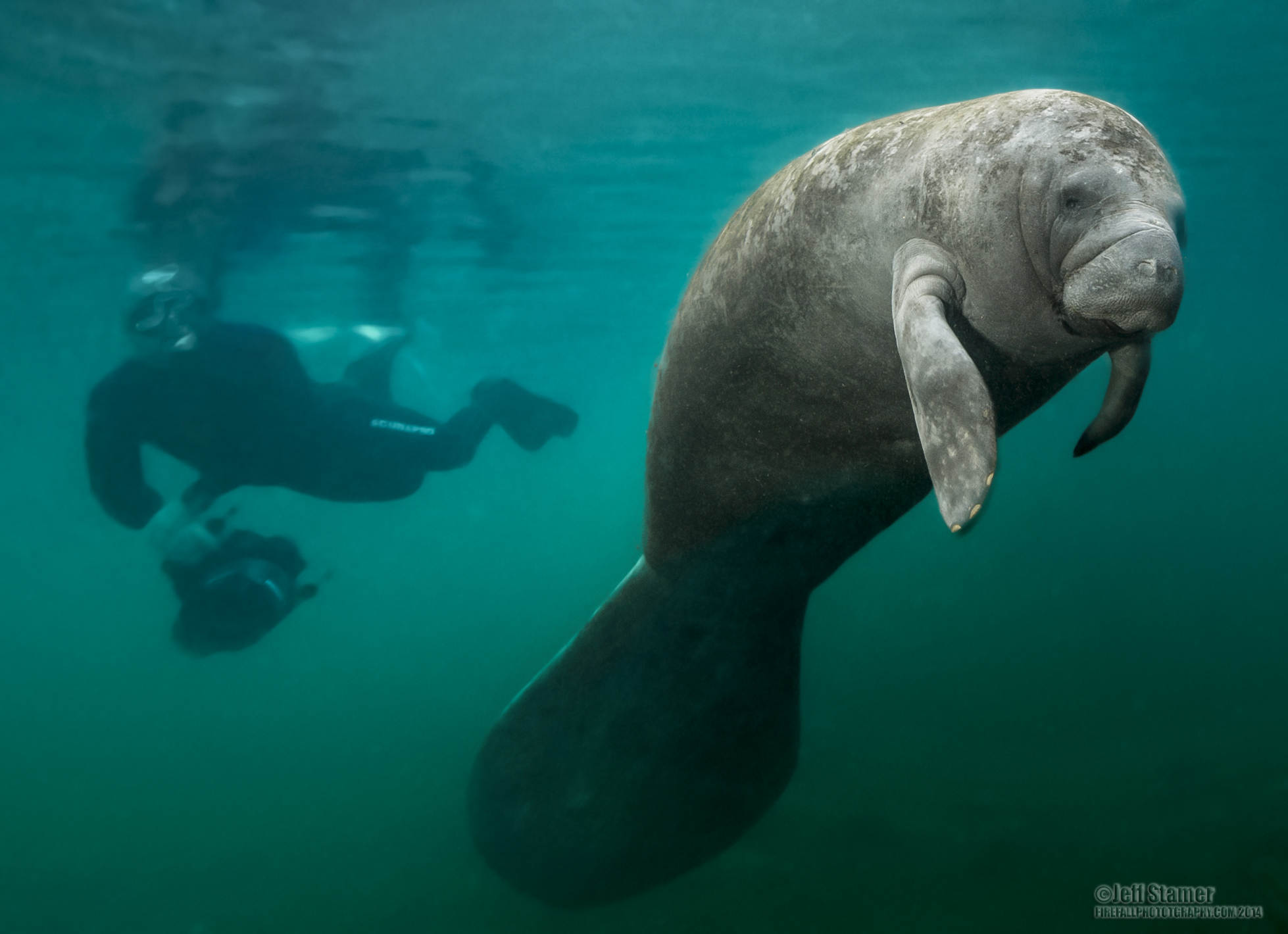 HQ Manatee Wallpapers | File 1213.19Kb