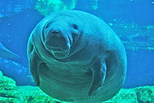 Images of Manatee | 220x147