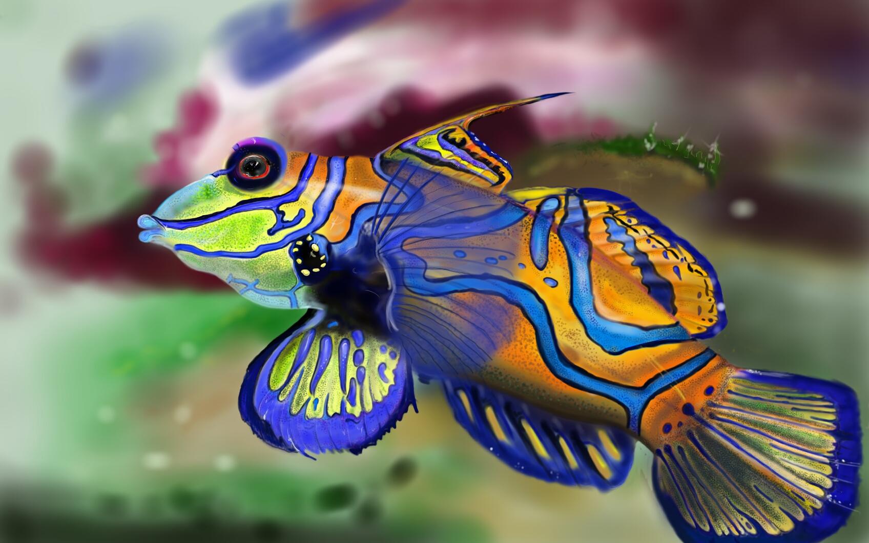 Mandarinfish Backgrounds, Compatible - PC, Mobile, Gadgets| 1696x1060 px