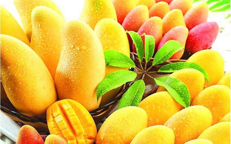 800x500 > Mango Wallpapers