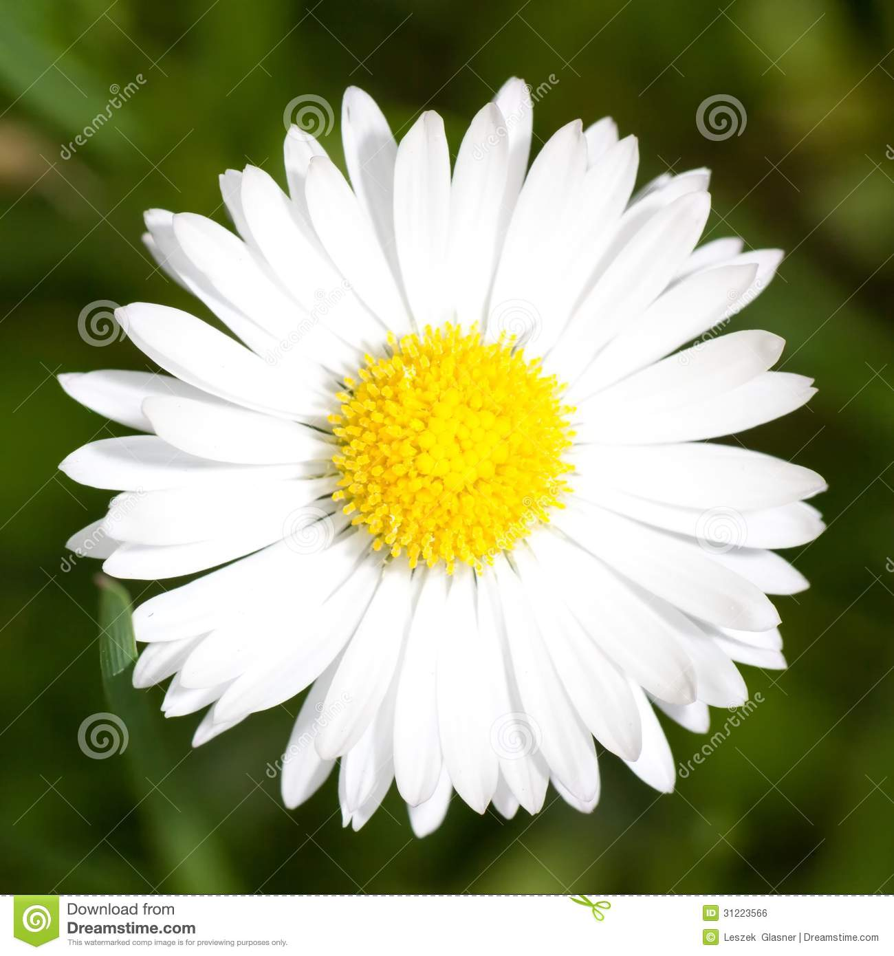 Images of Marguerite   1300x1390