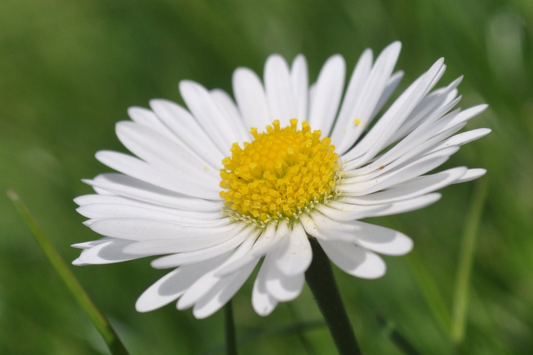 Marguerite Pics, Earth Collection