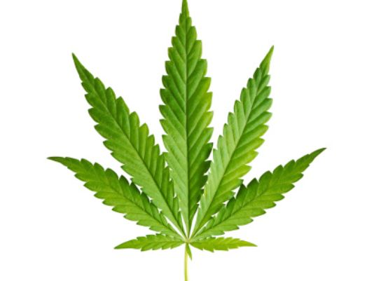 Marijuana Backgrounds, Compatible - PC, Mobile, Gadgets| 534x401 px