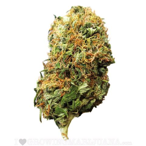 480x480 > Marijuana Wallpapers
