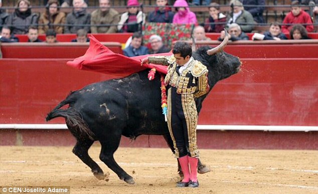 Matador HD wallpapers, Desktop wallpaper - most viewed
