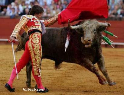 Amazing Matador Pictures & Backgrounds