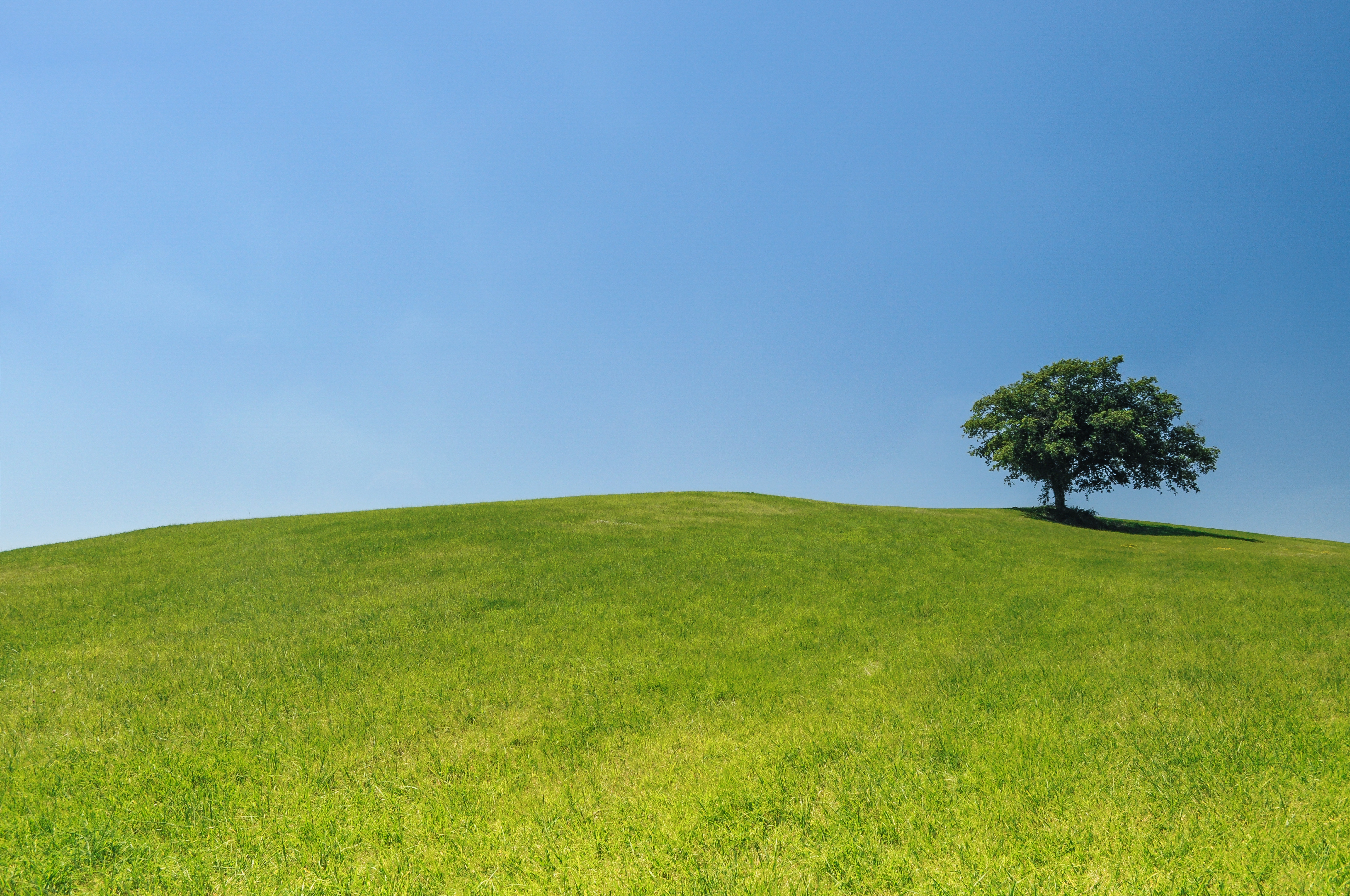 Meadow High Quality Background on Wallpapers Vista