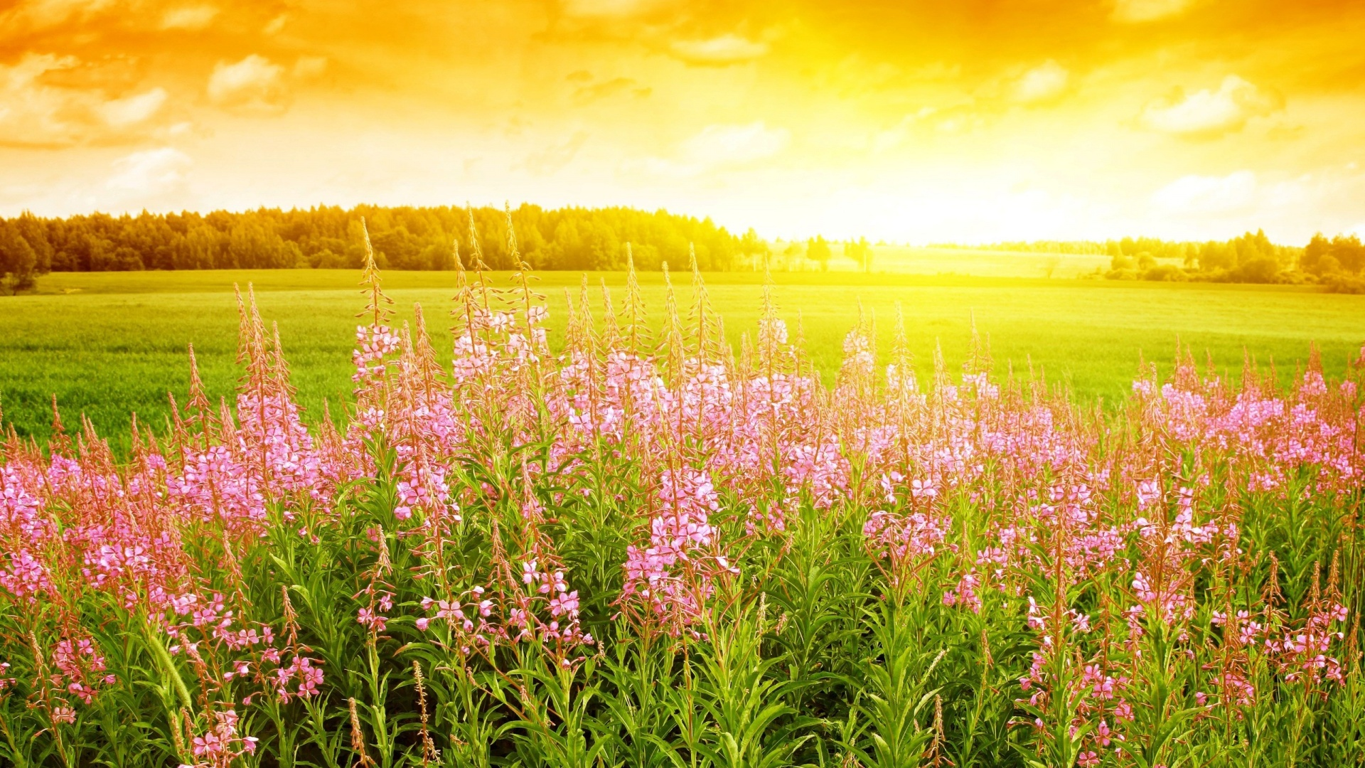 Meadow Backgrounds on Wallpapers Vista