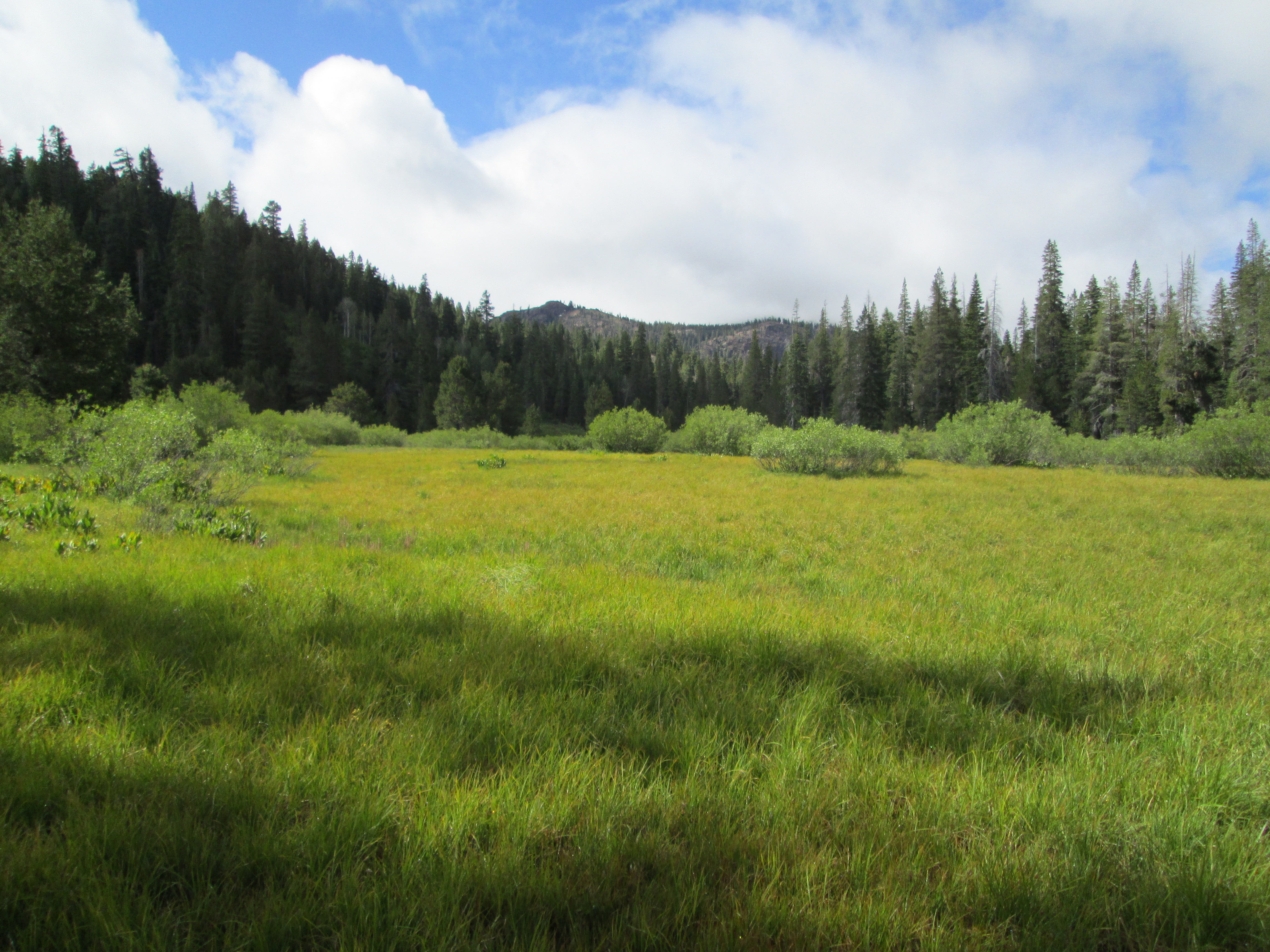 Meadow Pics, Earth Collection