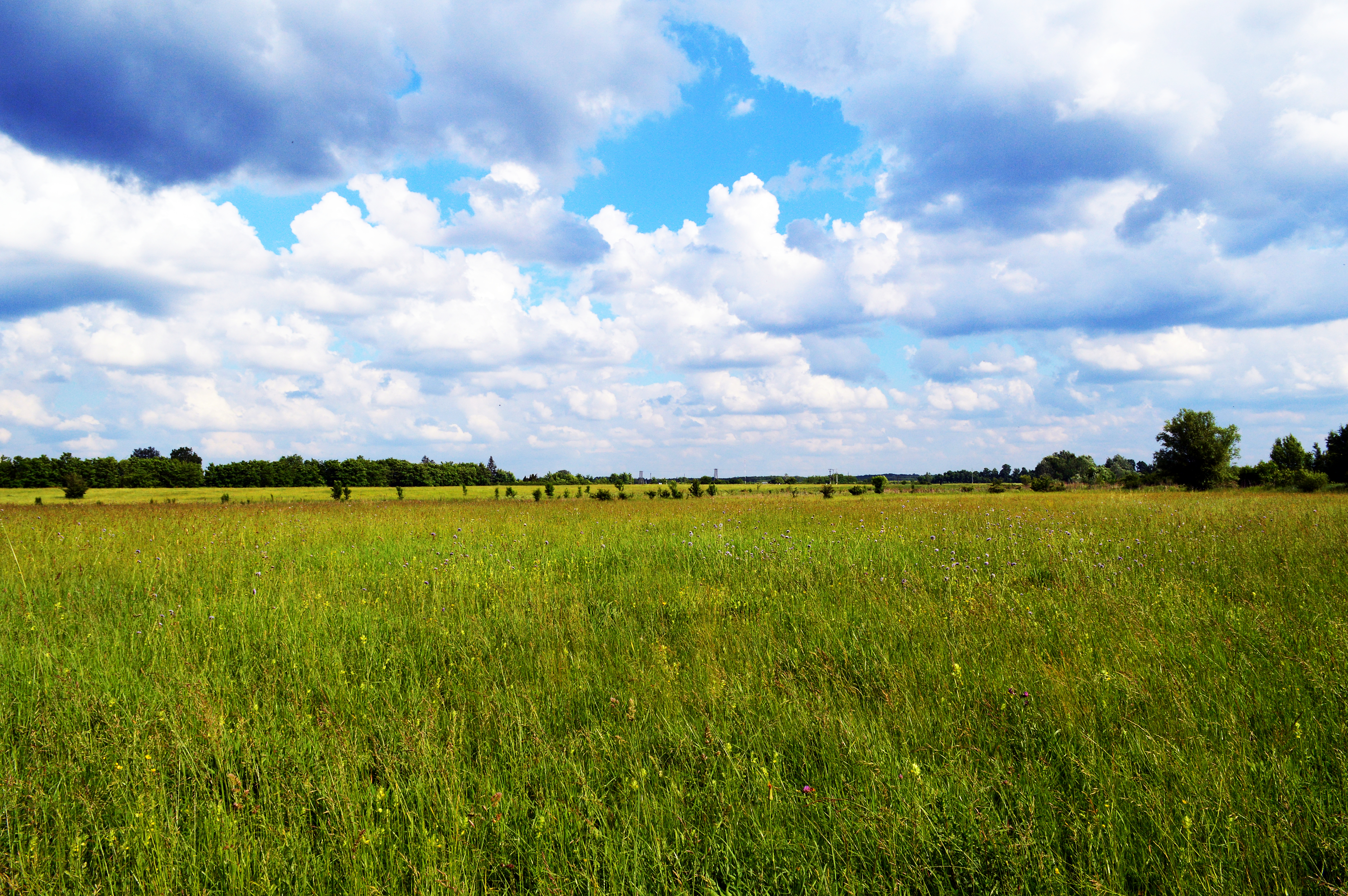 Nice wallpapers Meadow 6016x4000px
